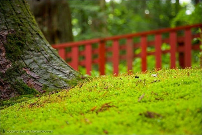 Moss with Red Fence