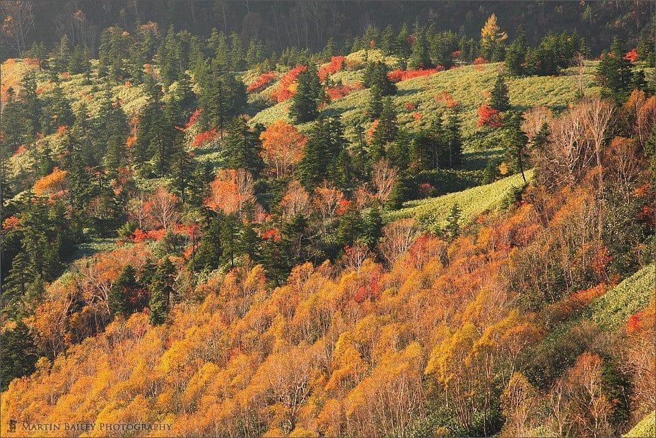 Brief Autumn