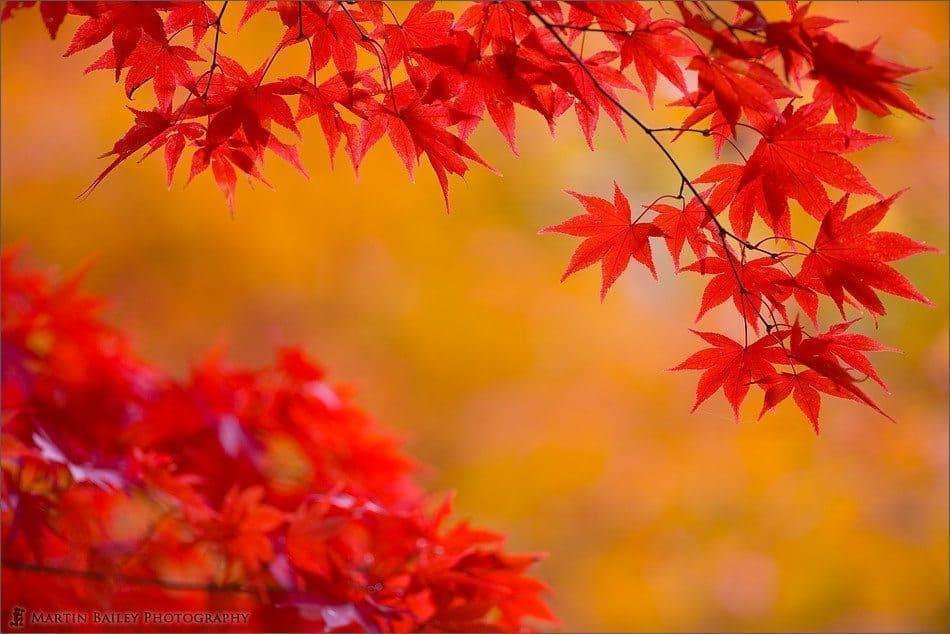 Red on Orange #3