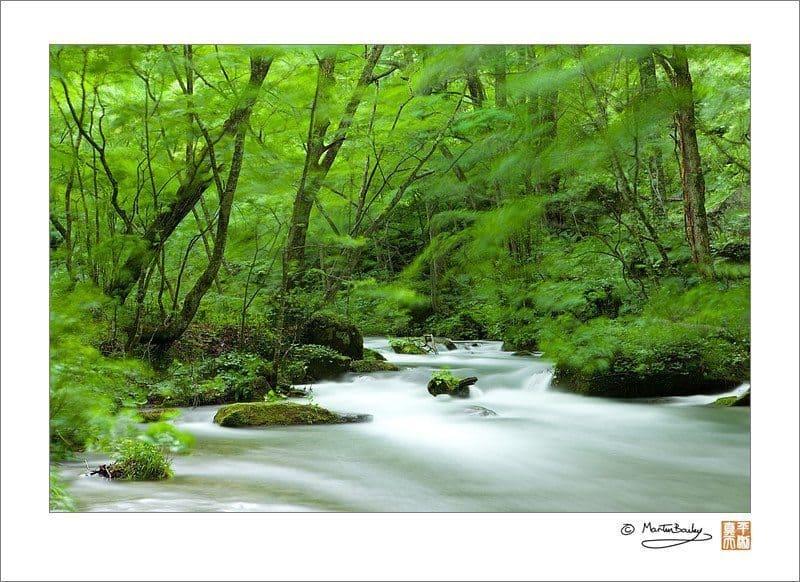 Oirase Mountain Stream