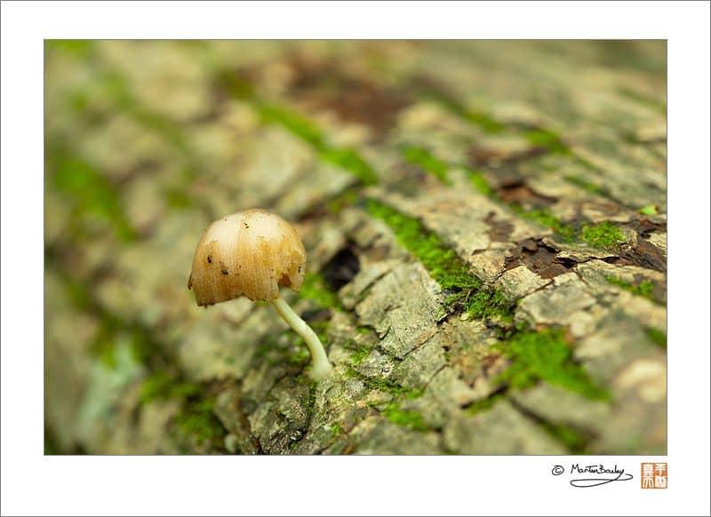 Mushroom on Fallen Tree