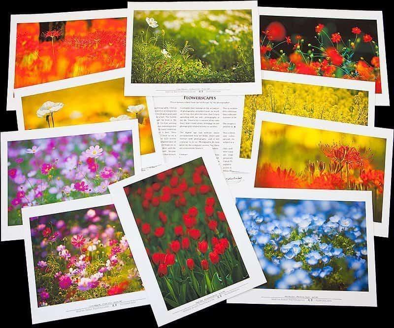 Flowerscapes Folio Prints