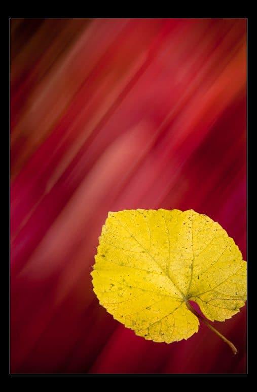 Yellow & Fall(ing)