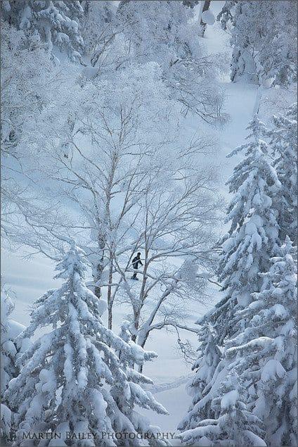 Skiing the Winter Wonderland