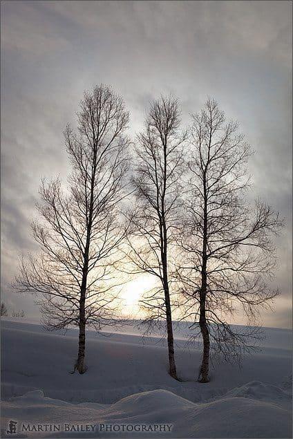 Trees at Takushinkan