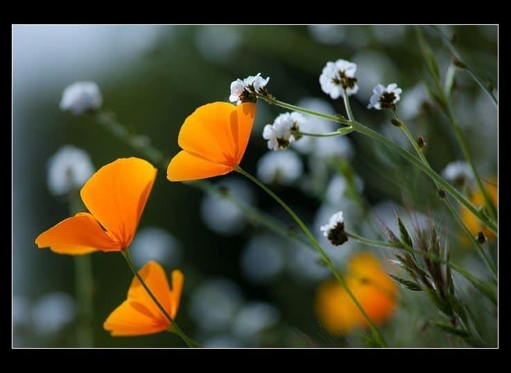 Flowerama (© Allen Oneal)