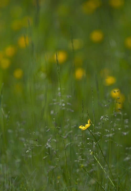 Flowerscape (© Dan Newcomb)