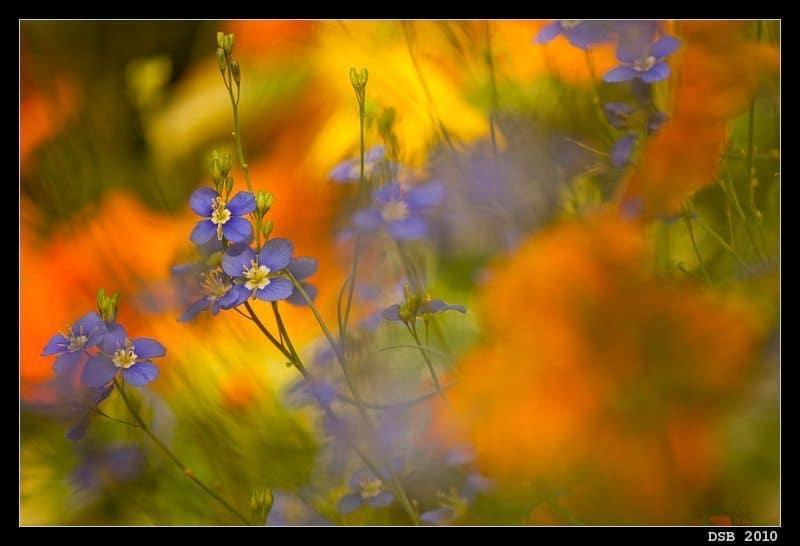 First Flowerscape (© Dennis Brennan)