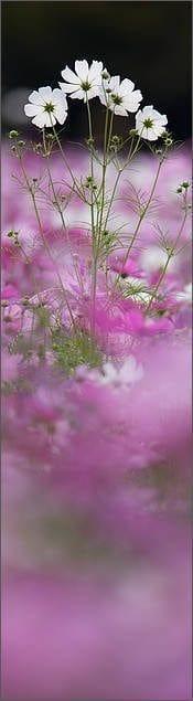 Grass is Greener (Bookmark) (© Martin Bailey)