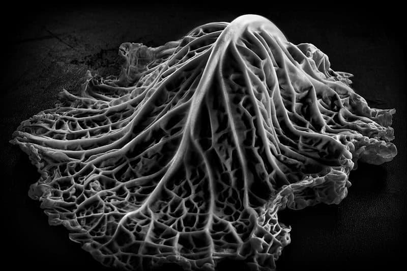 """Cabbage Leaf"" © Dan Newcomb"