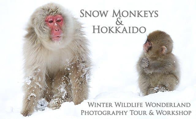 Snow Monkeys & Hokkaido Photography Tour & Workshop