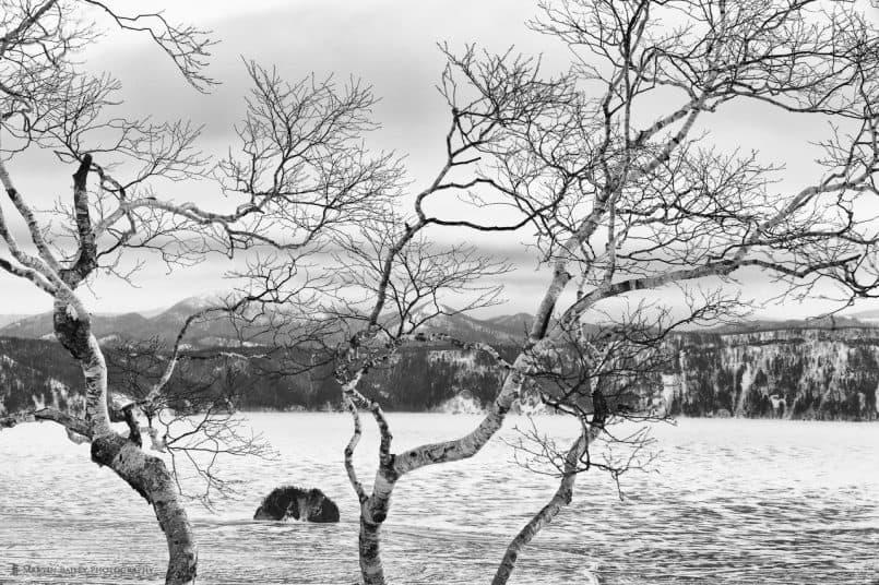 Birch Tree & Mashuu Lake