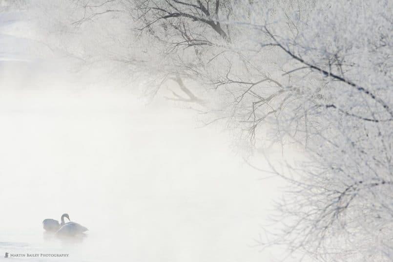Misty Awakening