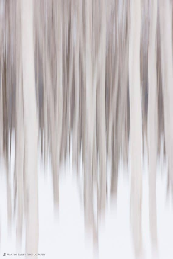 Abstract Birch