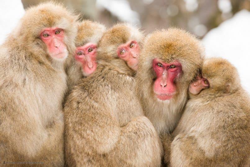 Five Monkeys