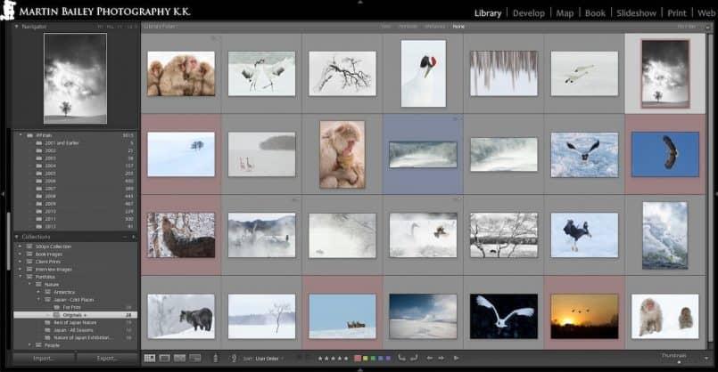 Japan Winter Wildlife & Landscape 28