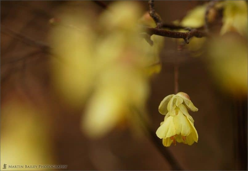 02_YellowBlossom_7555