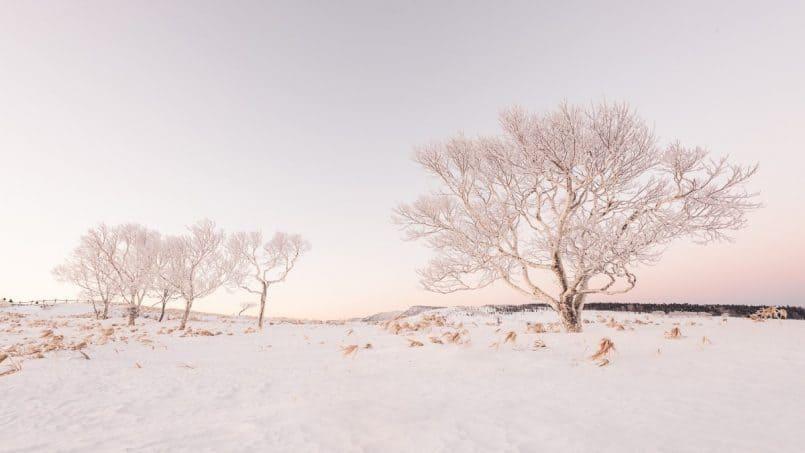 Bihoro Pass Trees by David duChemin