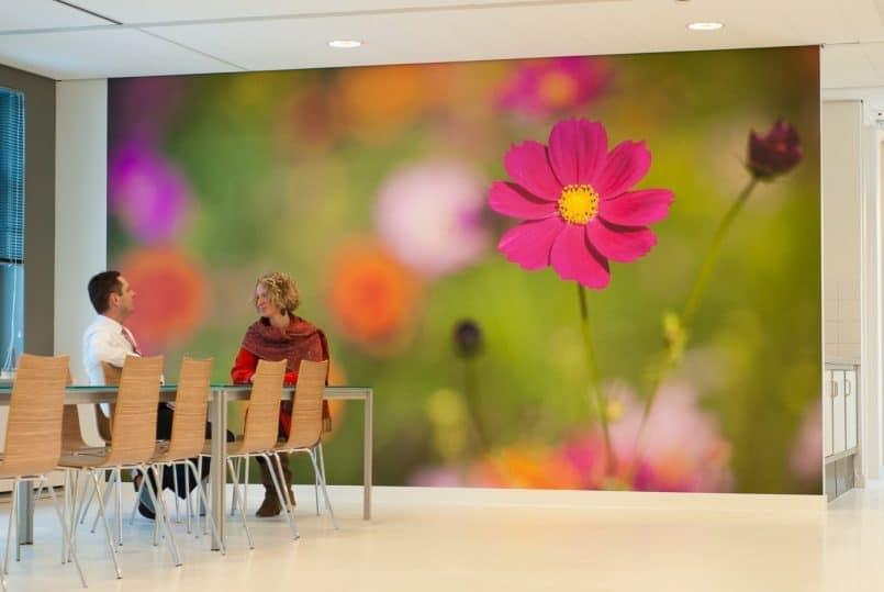 5 Meter Wide Wall Mural