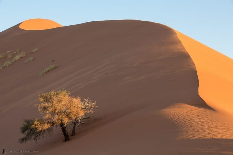 Tree in Boiling Sand Dune