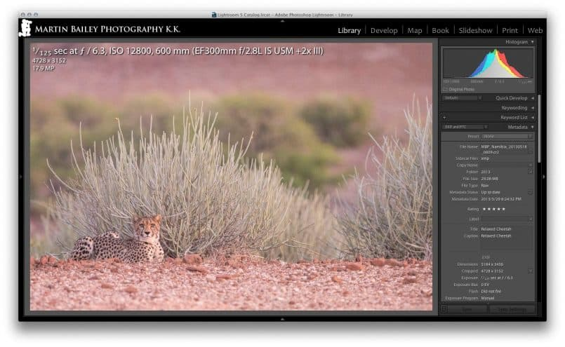 Cheetah at ISO 12800