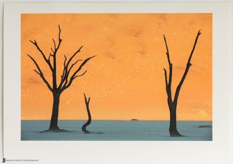 Deadvlei Trees on Pura Smooth