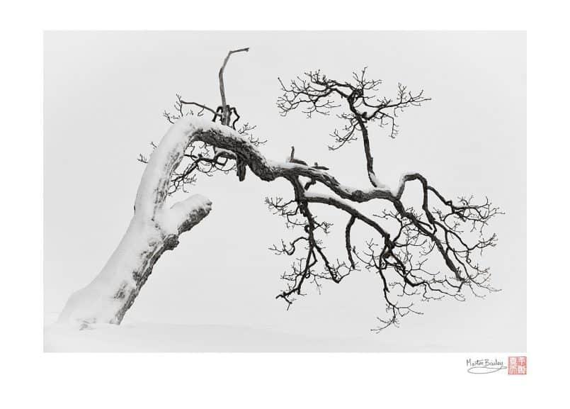 Kussharo Lake Tree