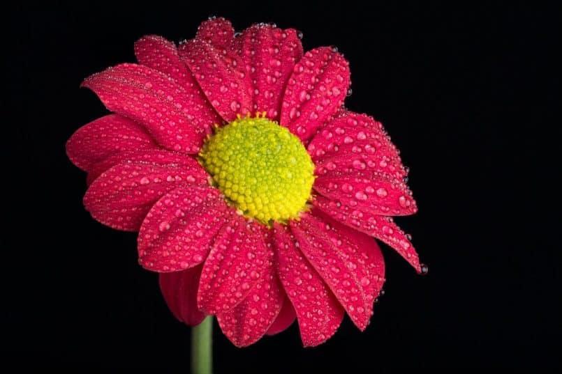 Focus Stacked Flower