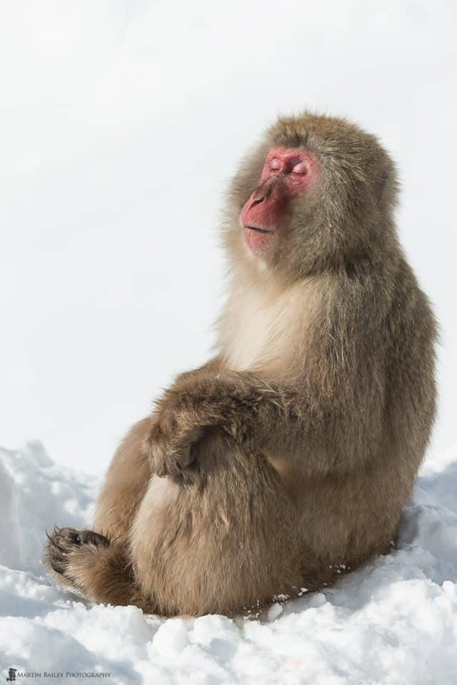 One Happy Monkey