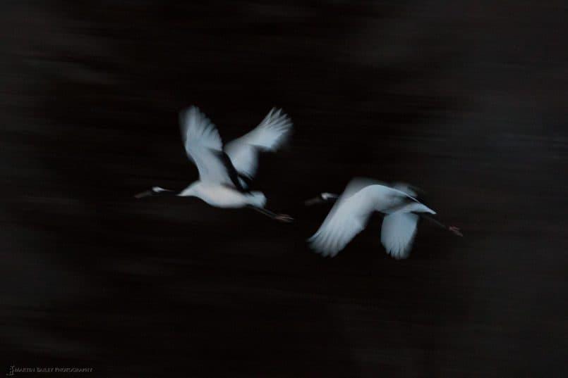 Cranes' Flight