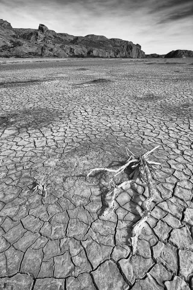Stick on Arid Riverbed