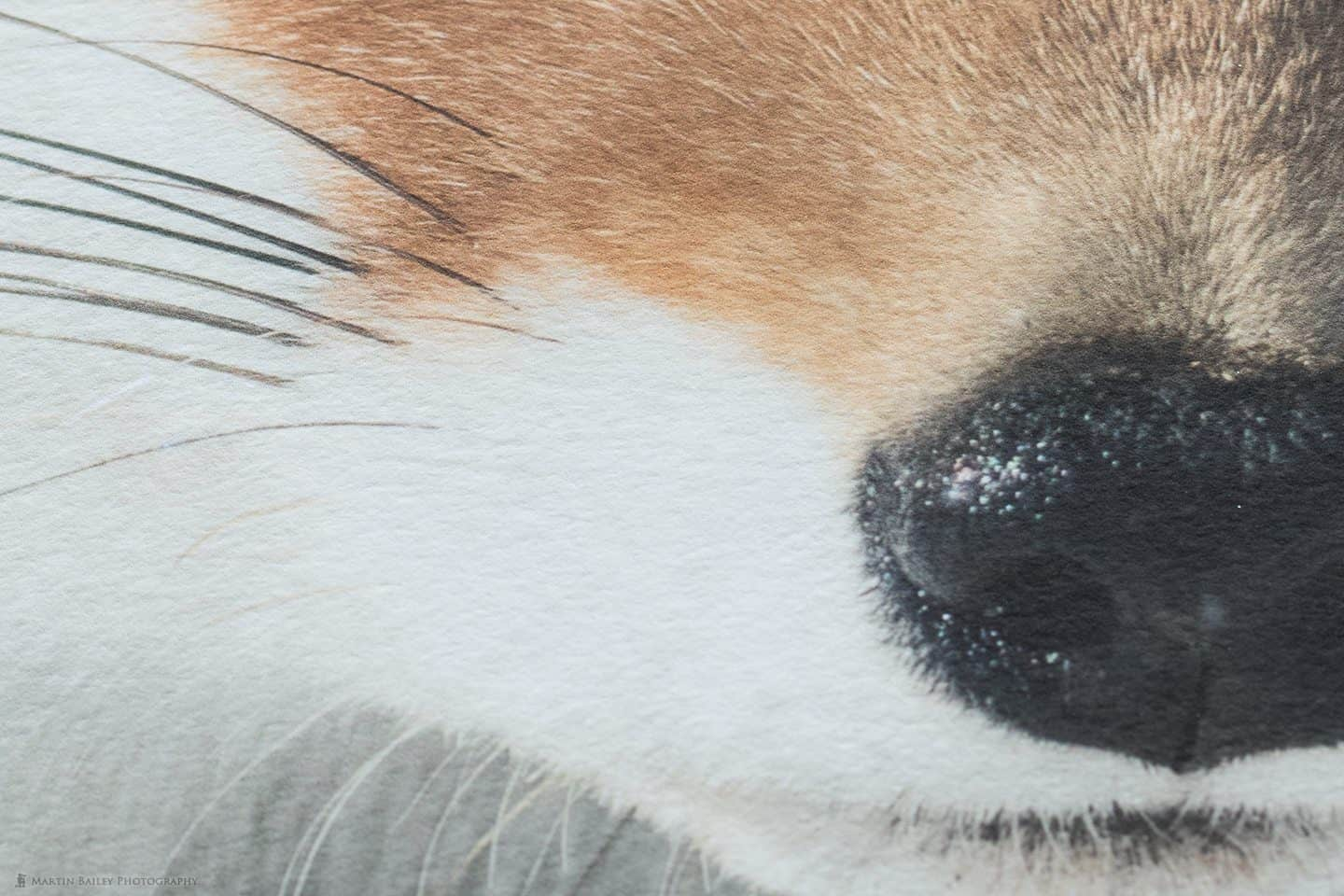 50% Crop from the Photo of Fox Print