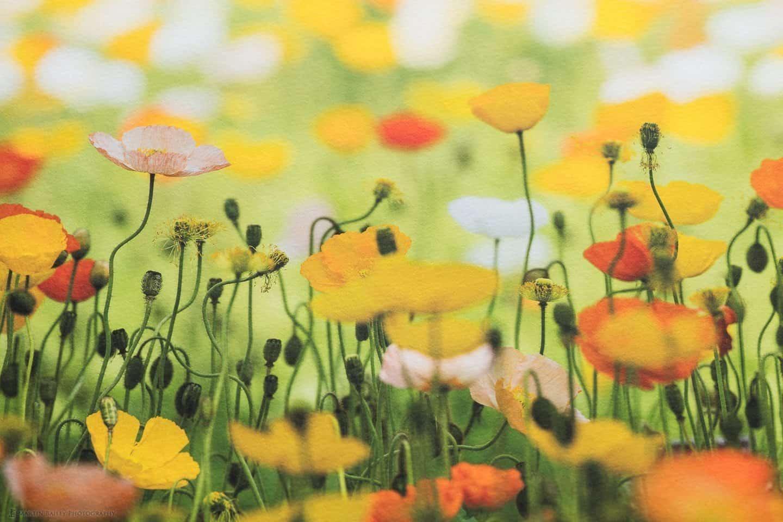 Flowerscape Print on Bagasse Textured Media