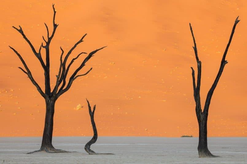 Deadvlei Camel Thorn Trees