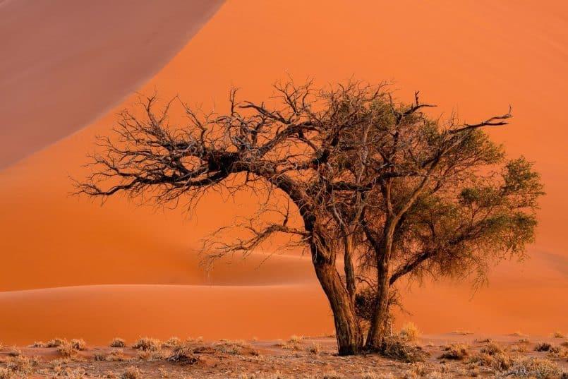 Tree at Dune 45