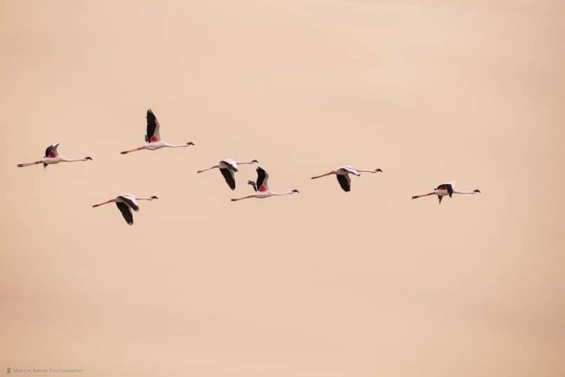Flamingoes against Dune