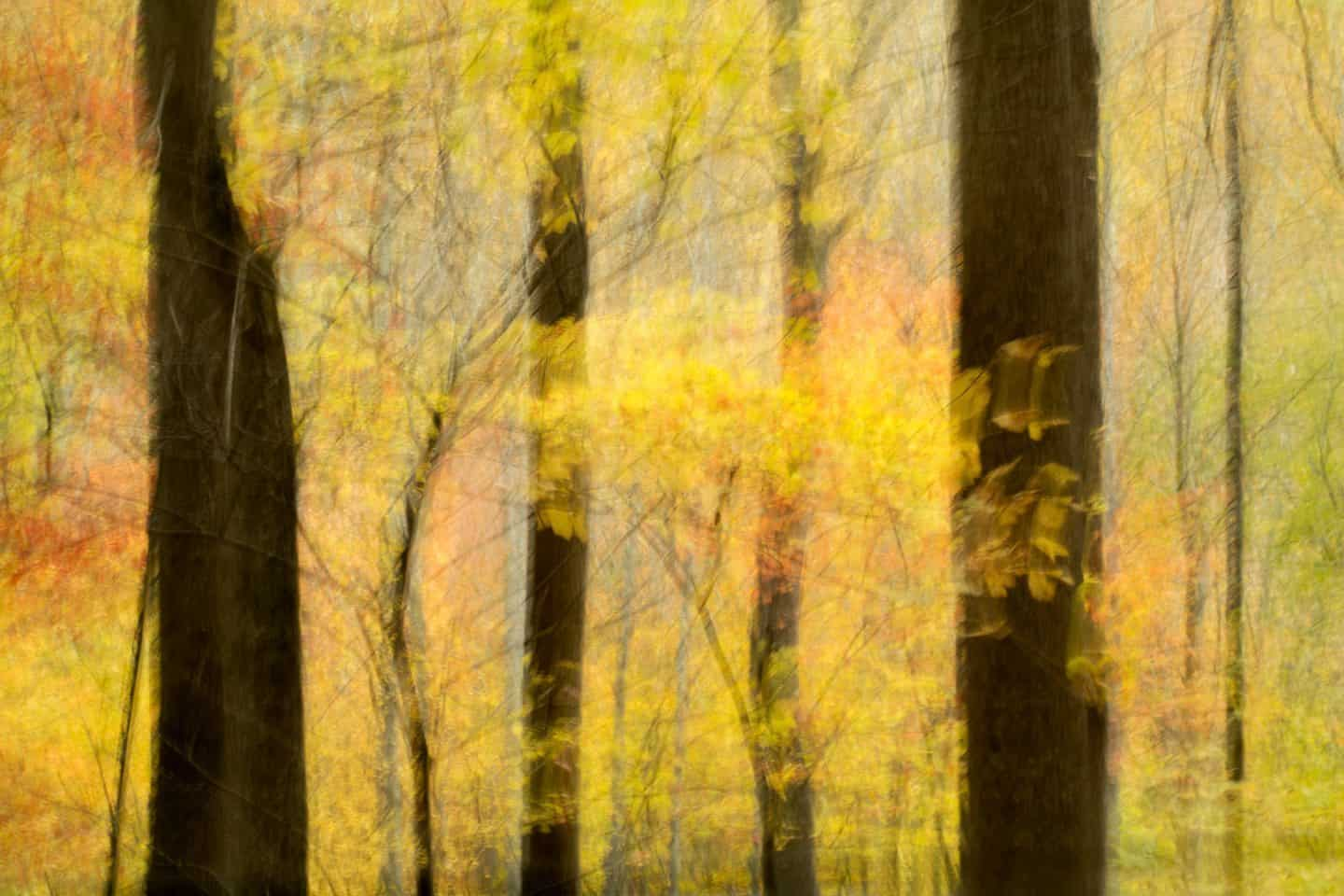 ICM Trees - Susanna M Euston
