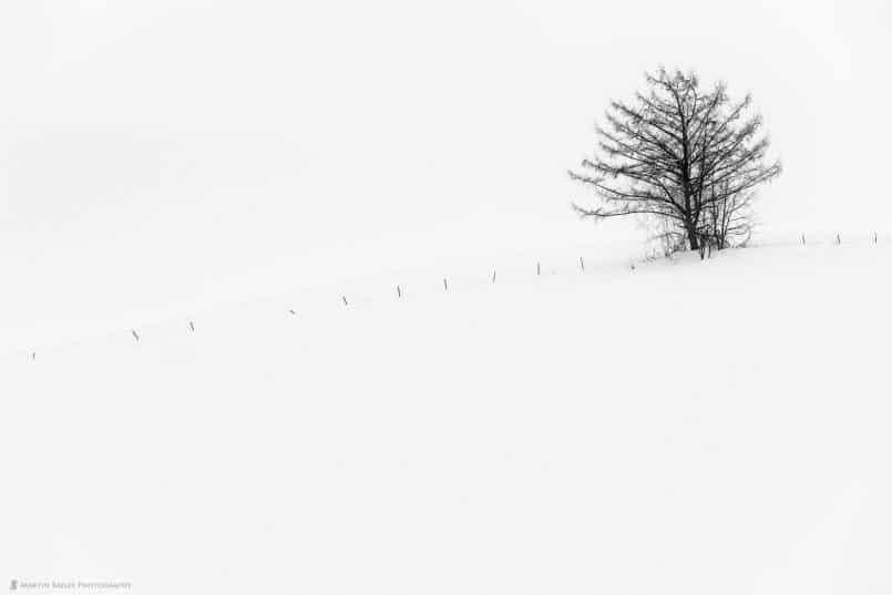 Hanazono Tree with Fence Posts