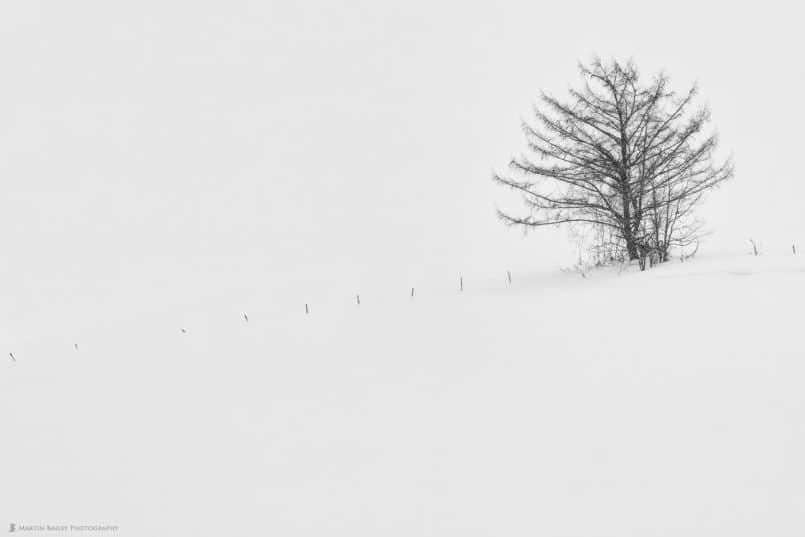 Hanazono Tree in Snow