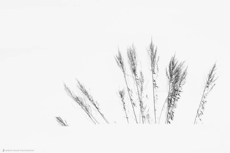 Radiating Grasses