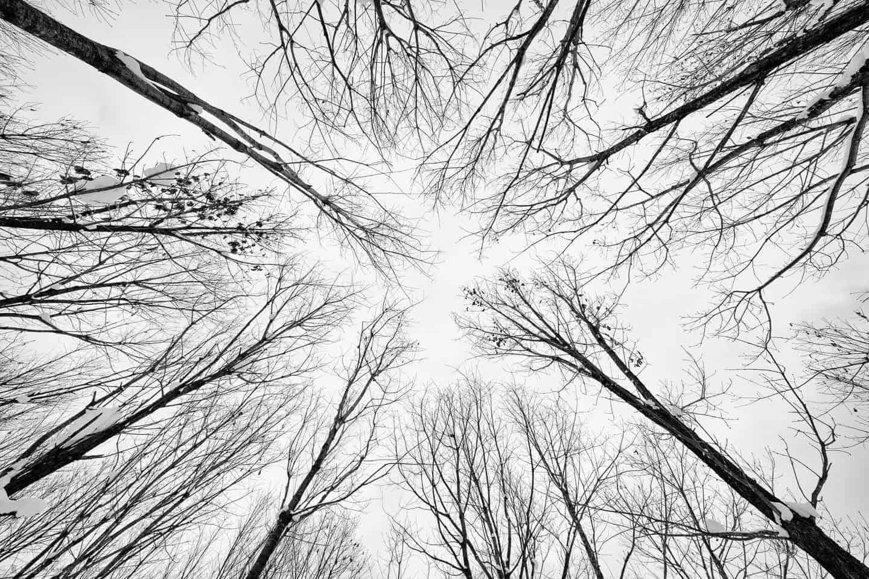 Trees in Mount Asahi Foothills