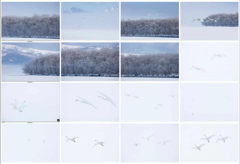 Last 16 Swan Fly-in Shots
