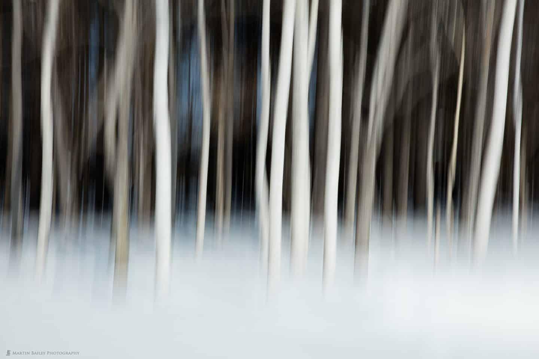 Birch Trees Over Dark Background