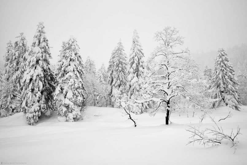 Mount Asahi Trees - Capture One Pro 9
