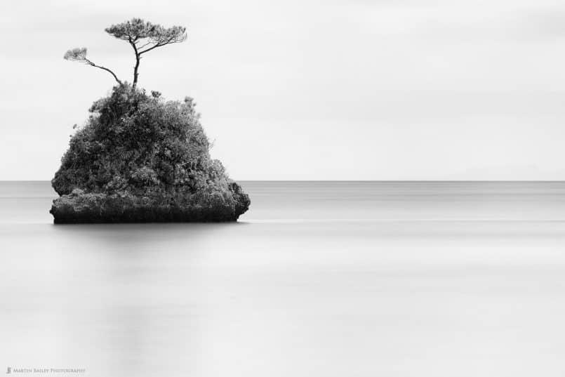Tree, Rock, Sea