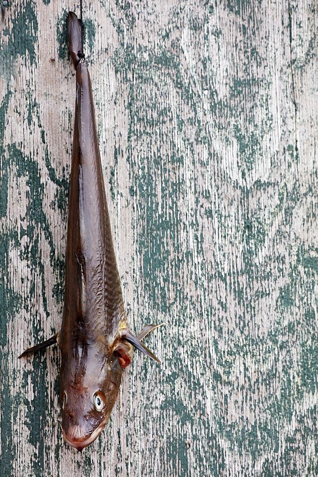 Hanging Fish in Tasiilaq