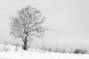 Biei Tree 2017