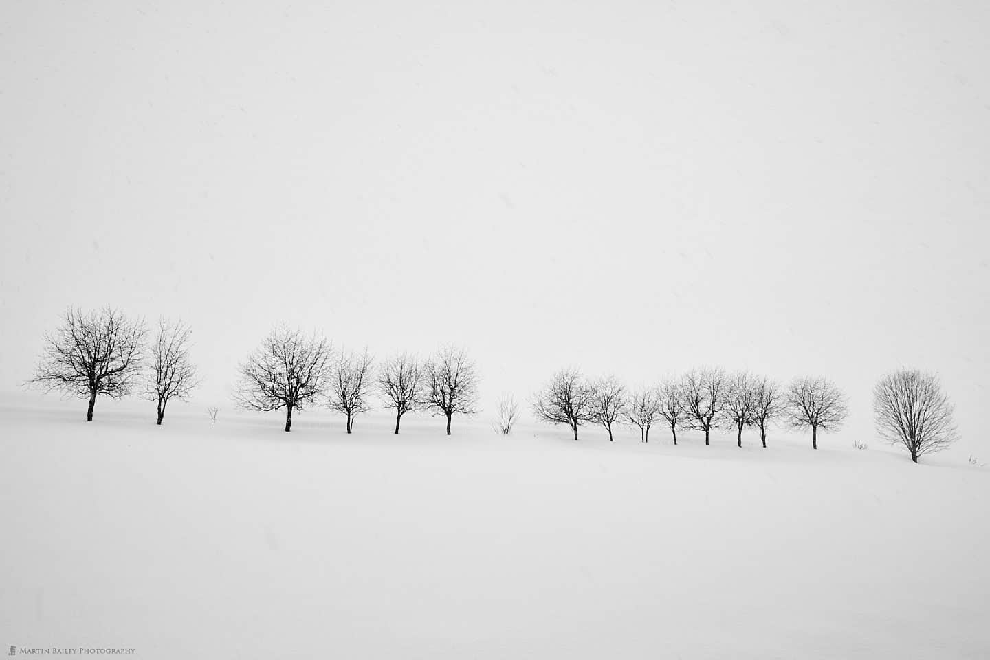 Takushinkan Trees in Snow