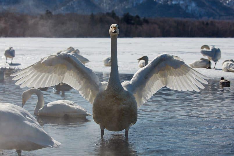 Display of Wings