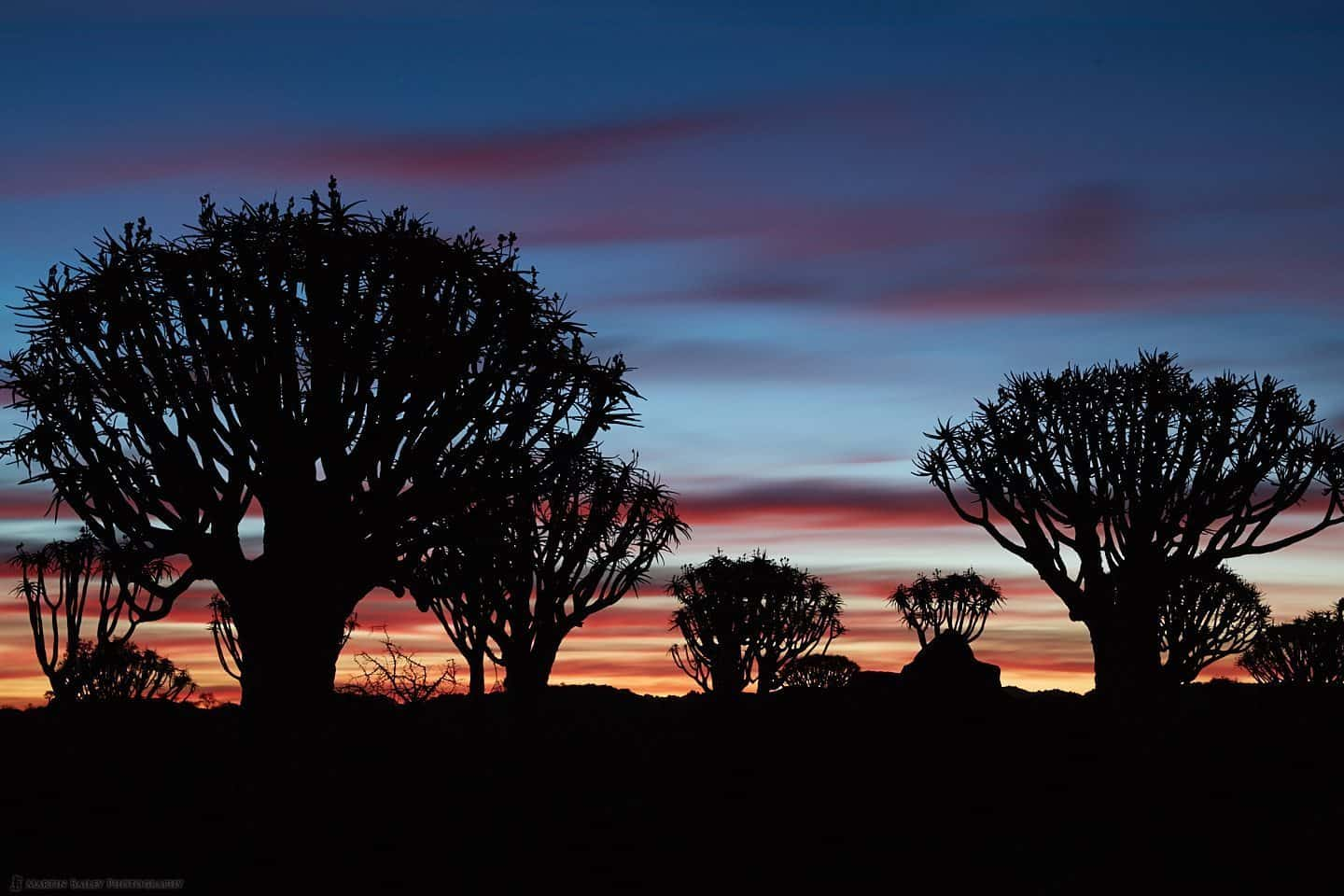 Dusk at Quiver Tree Forest :: 夕暮れの矢筒の木の森